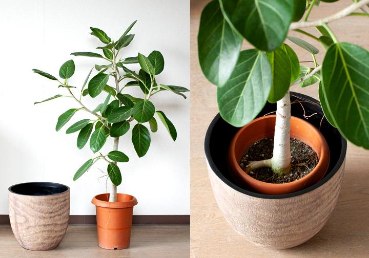 植木鉢の選び方のポイント